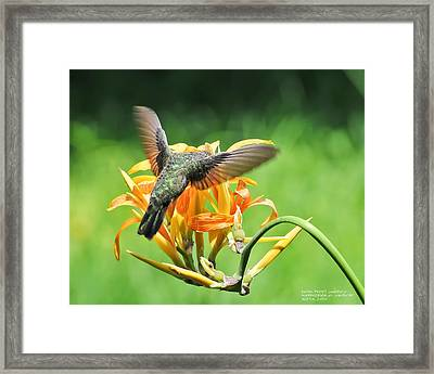 Hummingbird At Lunchtime Framed Print by David Perry Lawrence