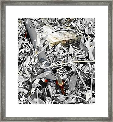 Hummingbird Bee Undone Framed Print by Yolanda Raker