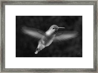 Hummingbird Framed Print by Ben and Raisa Gertsberg