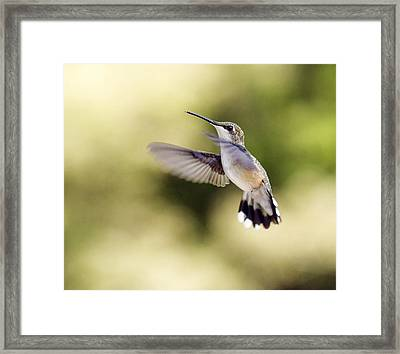 Framed Print featuring the photograph Hummingbird by David Lester