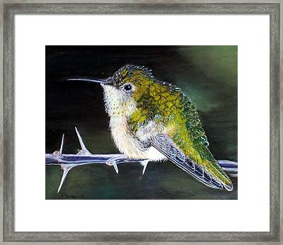 Framed Print featuring the painting Hummingbird by Debbie Baker