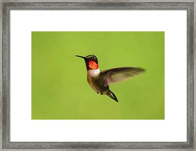 Hummingbird Defender Framed Print