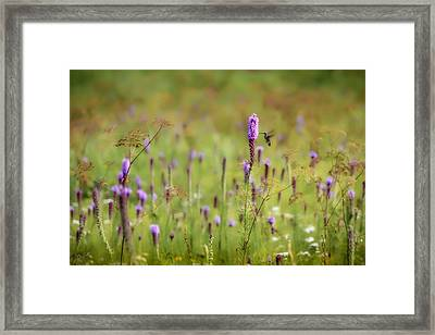 Hummingbird Dream Framed Print