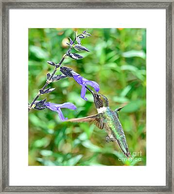 Hummingbird Emerald At Purple Bloom Framed Print by Wayne Nielsen