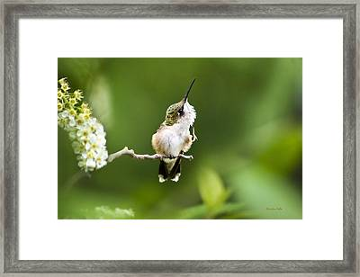 Framed Print featuring the photograph Hummingbird Flexibility by Christina Rollo