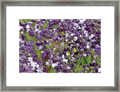 Hummingbird Flowers Framed Print