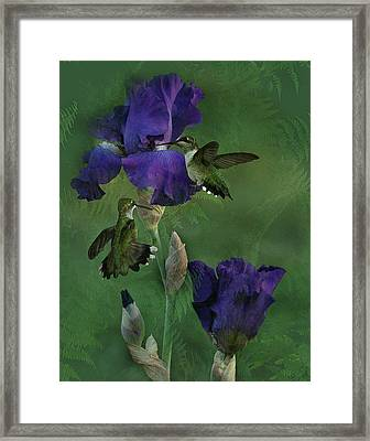 Hummingbird Gathering Framed Print