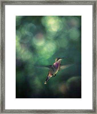 Hummingbird Hovering Framed Print by William Schmid