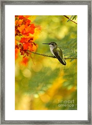 Hummingbird In A Painting Framed Print by Michael Cinnamond