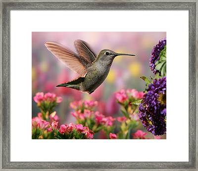 Hummingbird In Colorful Garden Framed Print