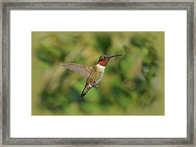 Hummingbird In Flight Framed Print by Sandy Keeton
