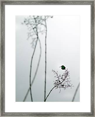 Hummingbird In Fog 2 Framed Print
