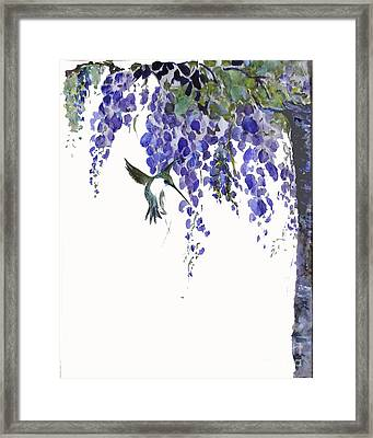 Hummingbird In Wisteria  Framed Print by Sibby S