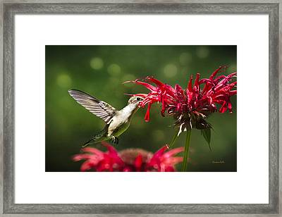 Hummingbird Indulgence Framed Print
