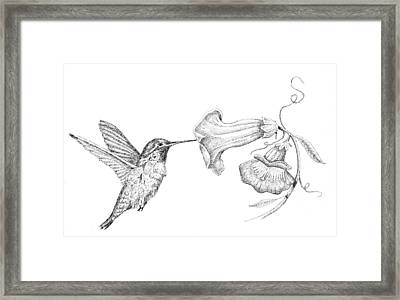 Hummingbird Framed Print by Kyle Peron