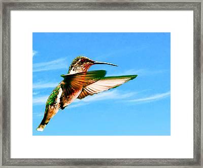 Hummingbird Lodi California Framed Print