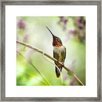 Hummingbird Looking For Love Square Framed Print