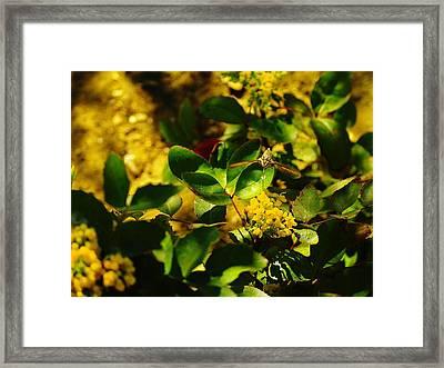 Hummingbird Moth Framed Print by Jeff Swan