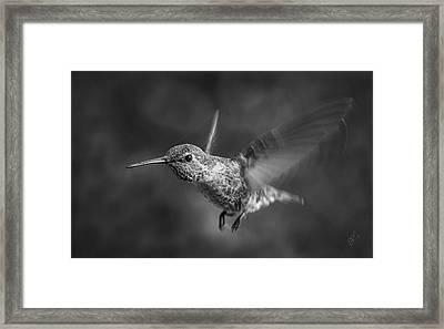 Hummingbird No 2 Framed Print by Ben and Raisa Gertsberg