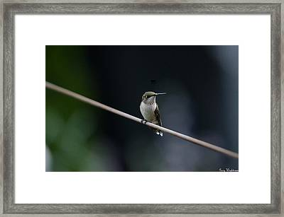 Framed Print featuring the photograph Hummingbird On A Wire by Gary Wightman