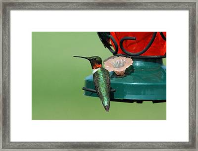 Hummingbird On Feeder Framed Print