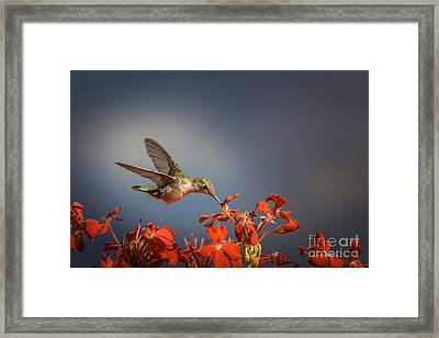 Hummingbird Or My Summer Visitor Framed Print by Jola Martysz