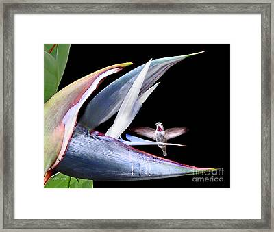 Framed Print featuring the photograph Hummingbird Paradise by Jennie Breeze