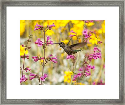 Hummingbird Paradise Framed Print