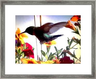 Hummingbird Framed Print by Renee Michelle Wenker