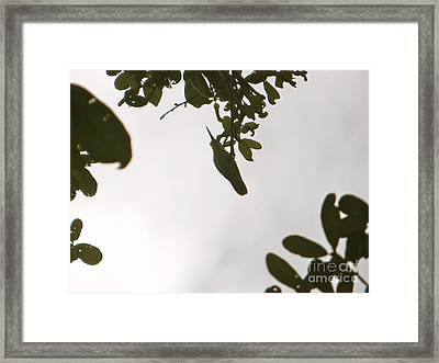 Framed Print featuring the photograph Hummingbird Silhouette 1 by Joy Hardee