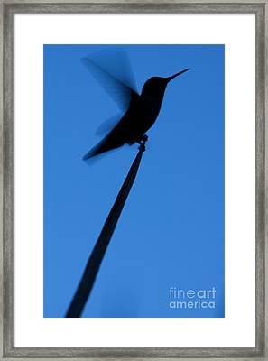 Hummingbird Silhouette Framed Print