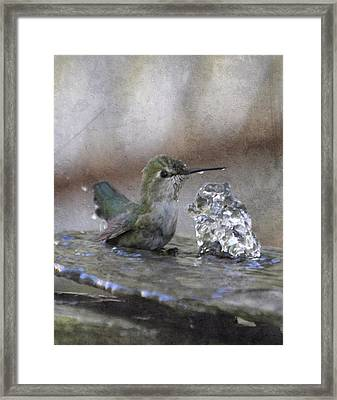 Hummingbird Spa Framed Print