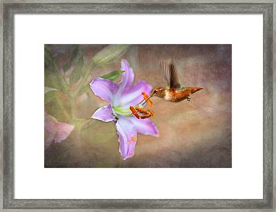 Hummingbird Sweets Framed Print by Mary Timman