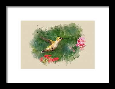 Designs Similar to Hummingbird - Watercolor Art