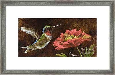 Hummingbird With Gold Leaf By Vic Mastis Framed Print