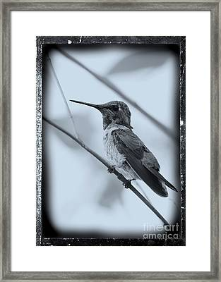 Hummingbird With Old-fashioned Frame 1 Framed Print by Carol Groenen