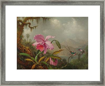 Hummingbirds And Orchids Framed Print