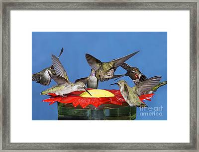 Hummingbirds At Feeder Framed Print