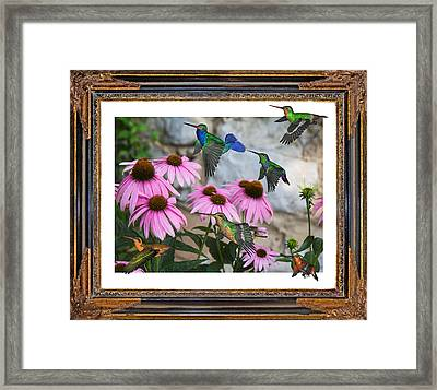 Hummingbirds Framed Print by Betsy Knapp