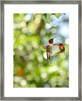 Hummingbirds In Fierce Fight Of Arial Flight Framed Print by Wayne Nielsen