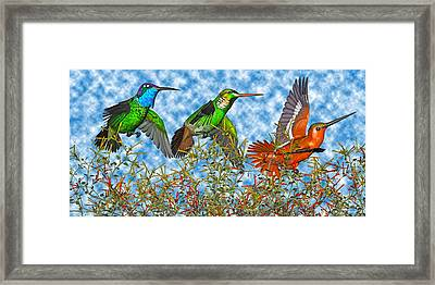 Hummingbirds Two Of Two Framed Print by Betsy Knapp