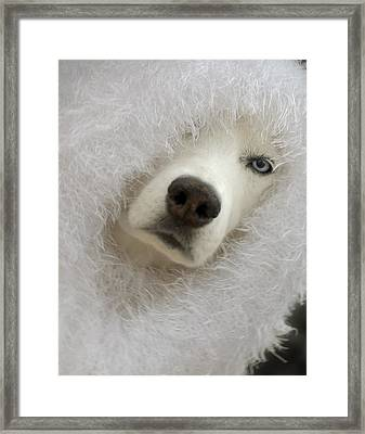 Humorous Pets Framed Print by Cindy Rubin