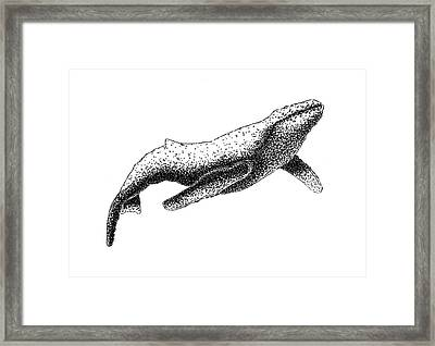 Humpback Whale - Black And White Framed Print by Michael Vigliotti