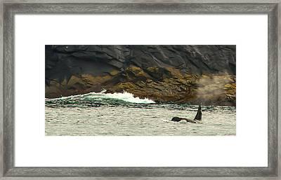 Humpback Whale Framed Print by Debra  Miller