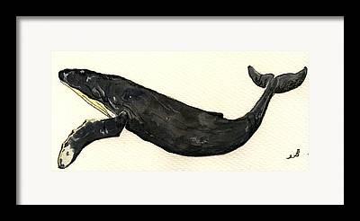 Humpback Drawings Framed Prints