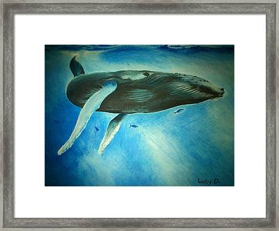 Humpback Whale Framed Print by Lucy D