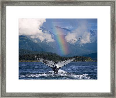 Humpback Whale Submerging Showing Fluke Framed Print by John Hyde