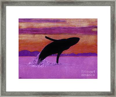 Humpback - Whale - Sunset Framed Print by D Hackett