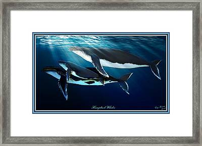 Humpback Whales Framed Print by Greg Pezzoni