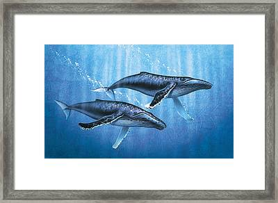 Humpback Whales Framed Print by JQ Licensing
